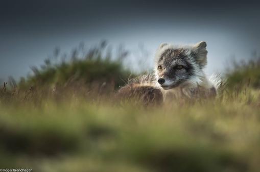 © Roger Brendhagen
